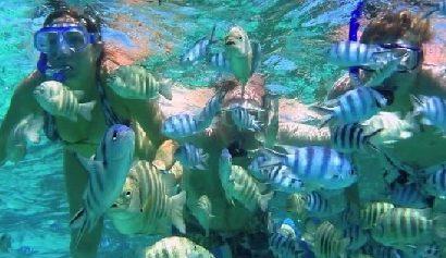 pulau abang, pulau abang batam, pulau abang snorkeling, pulau abang diving, pulau abang batam diving, snorkeling pulau abang batam, pulau abang diving batam, snorkeling di pulau abang batam, snorkeling di pulau abang, diving di pulau abang batam, paket ke pulau abang, tour ke pulau abang, tour pulau abang batam, trip pulau abang batam, travel pulau abang, travel pulau abang batam